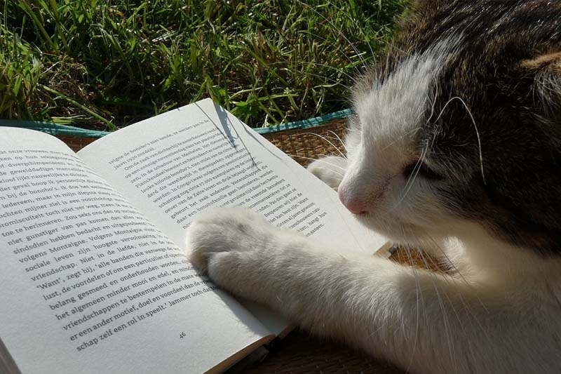 kucing cerita