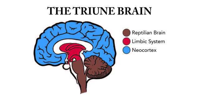 The Reptilian Brain
